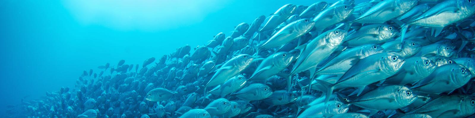 fish-swarm-1600